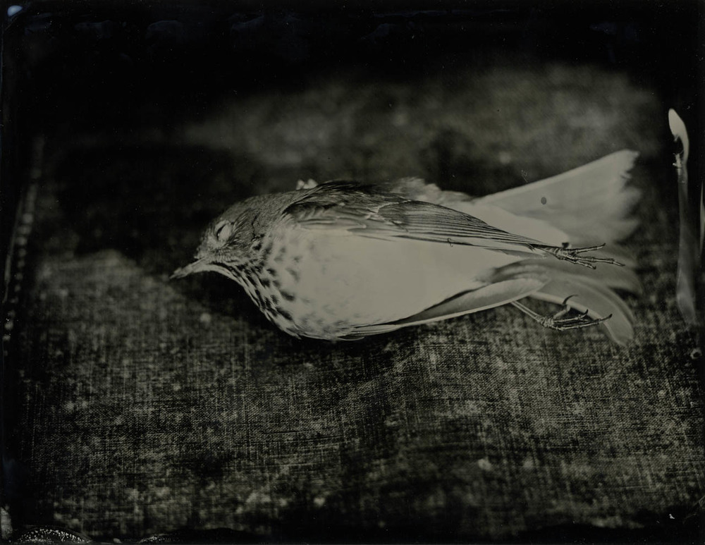 bird after 2.jpg