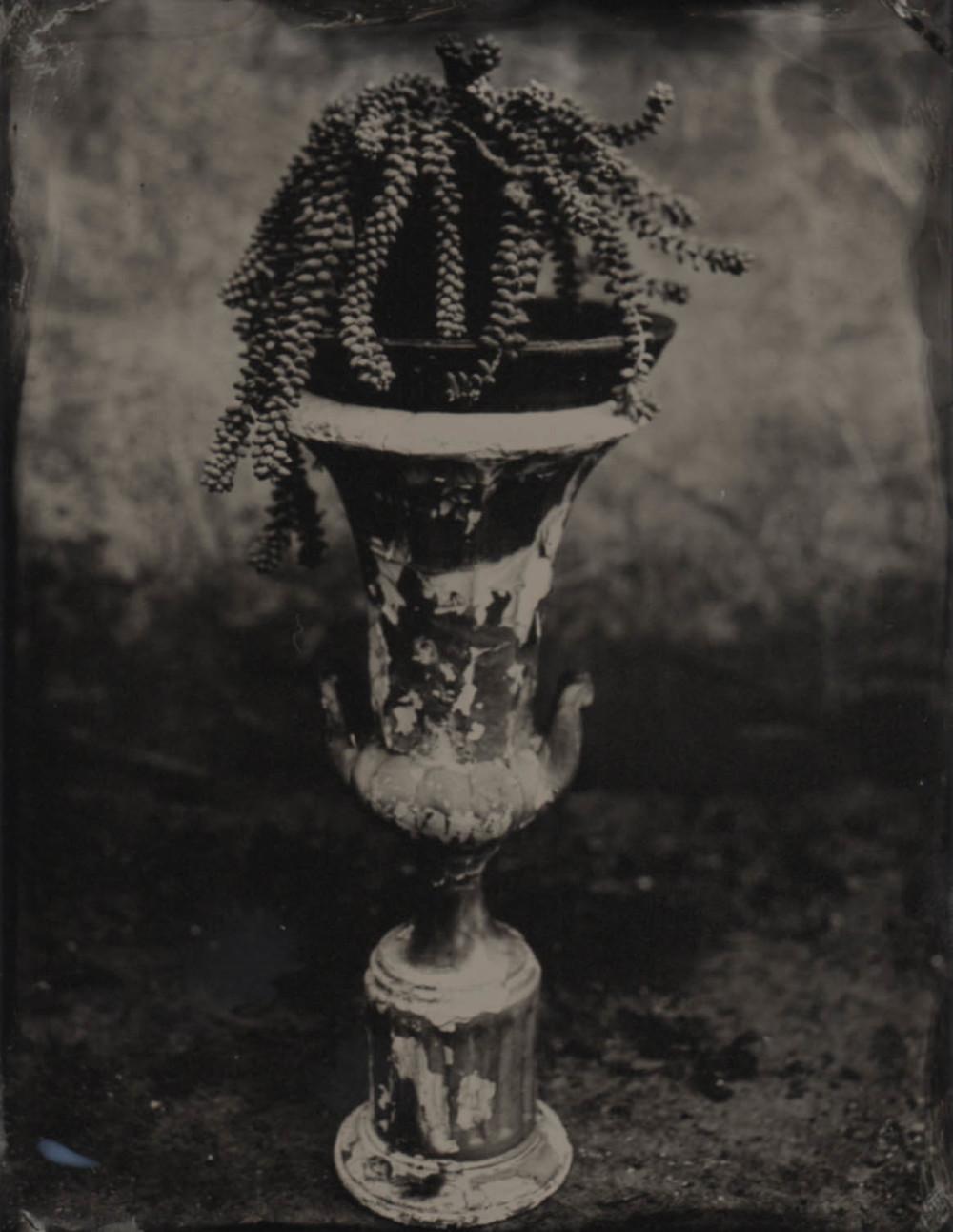 plant on pedestal_.jpg