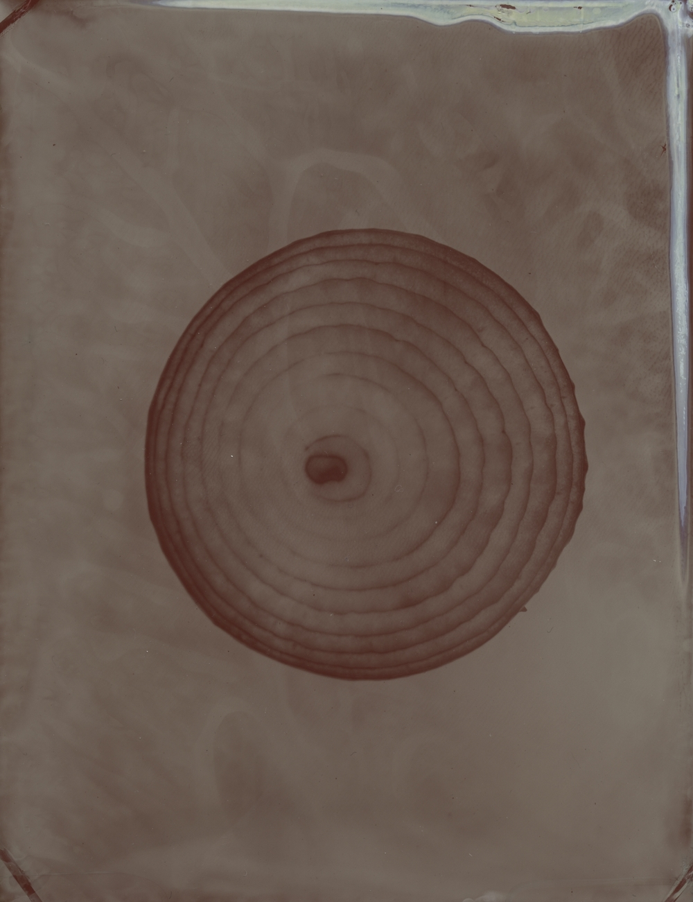 onion sm red I.jpg