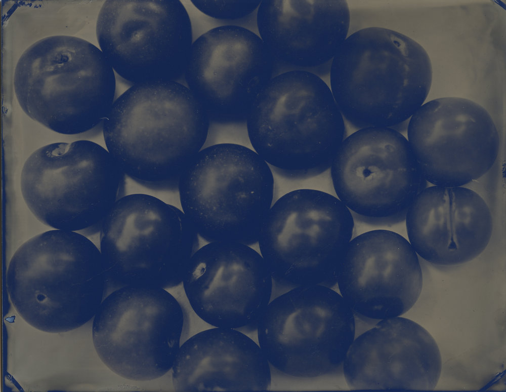 sour plum blu I.jpg