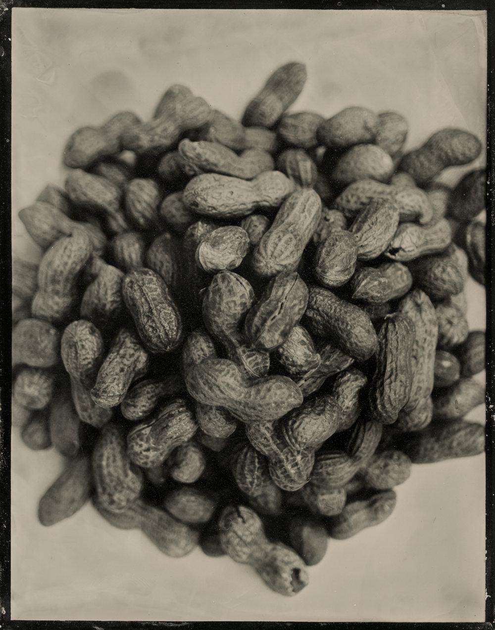peanut 3b.jpg