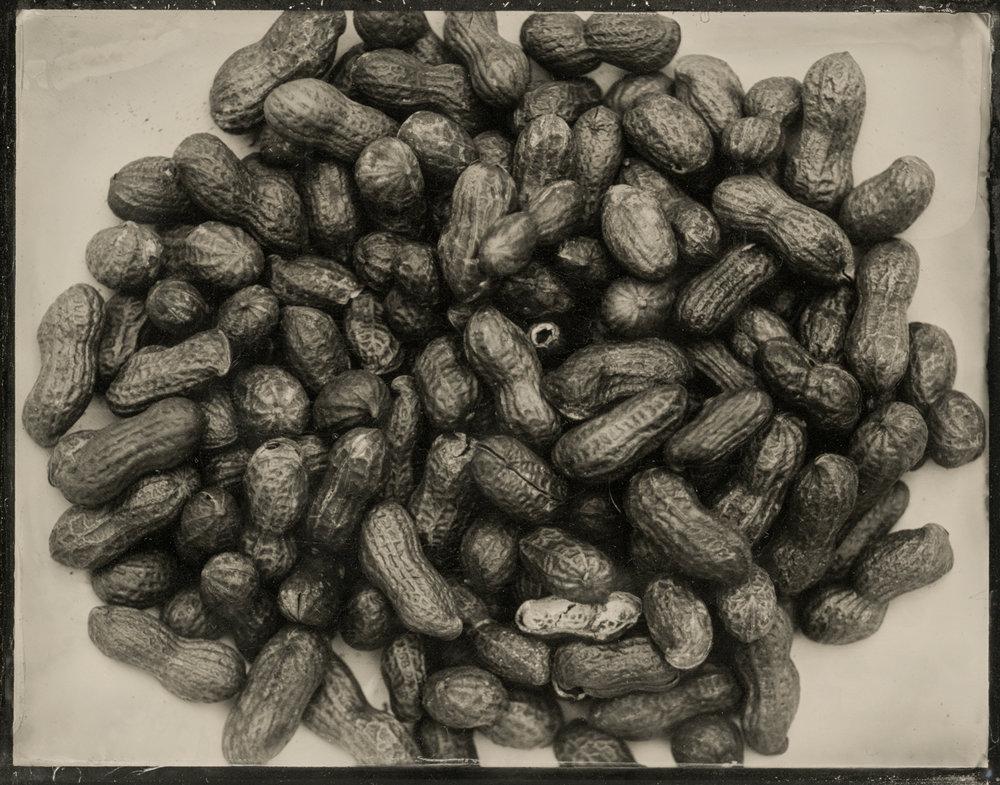 peanut 2d.jpg