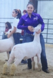2014 Champion Southdown at Webb County