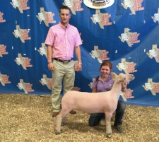 2016 Champion Southdown & 3rd Overall in Show-TBSS Gatesville Show B Shown by Carlye Winfrey