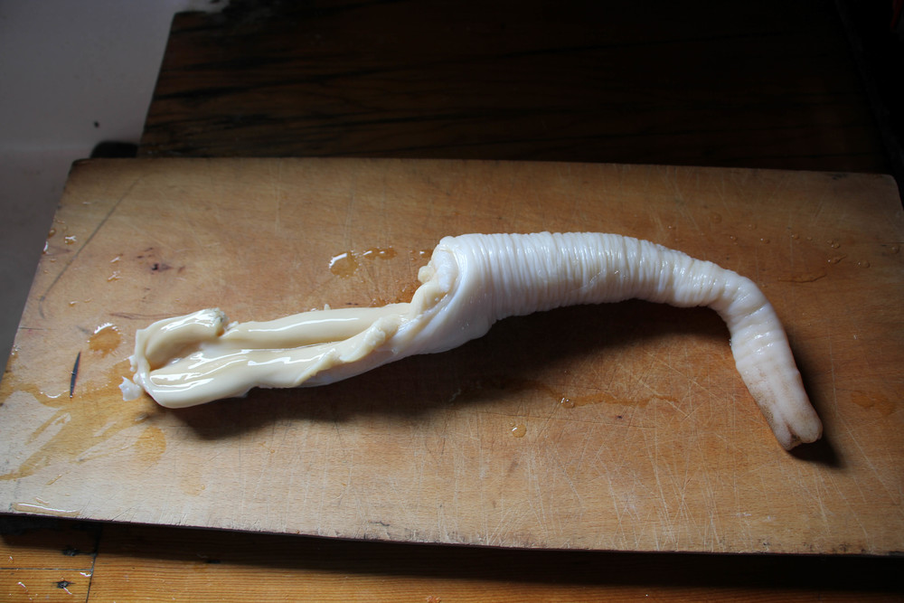 Photo by Bonnie Obremski. A clean geoduck.
