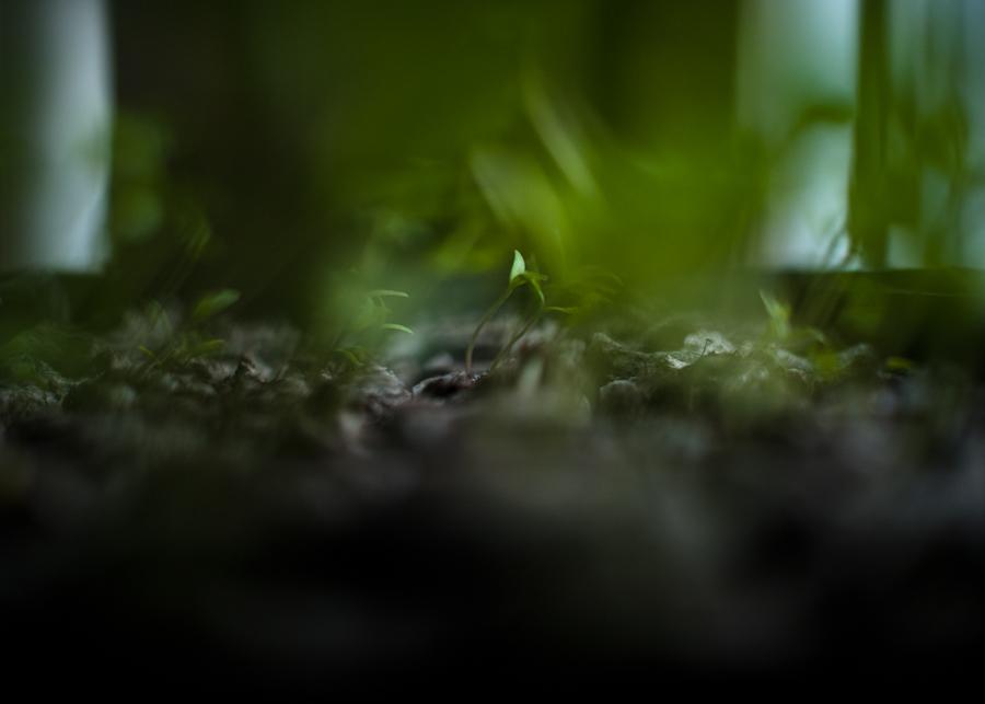 Seeds-026.jpg