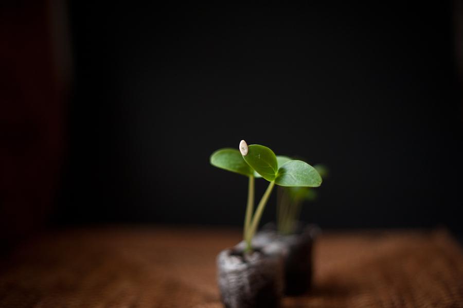 Seeds-029.jpg