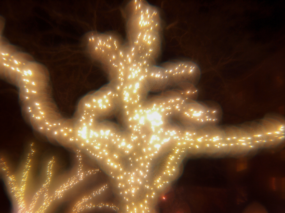 Lighted Tree #1