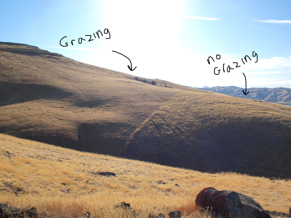 grazing no grazing with text.jpg