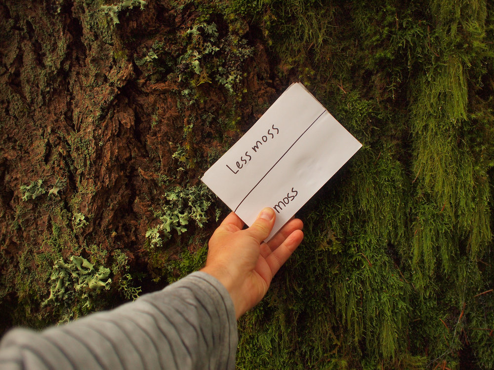 Less Moss More Moss.jpg