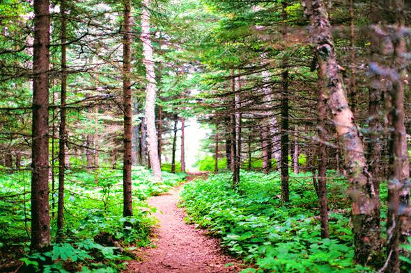 Cascade-river-state-park-Hiking-Minnesota04.jpg