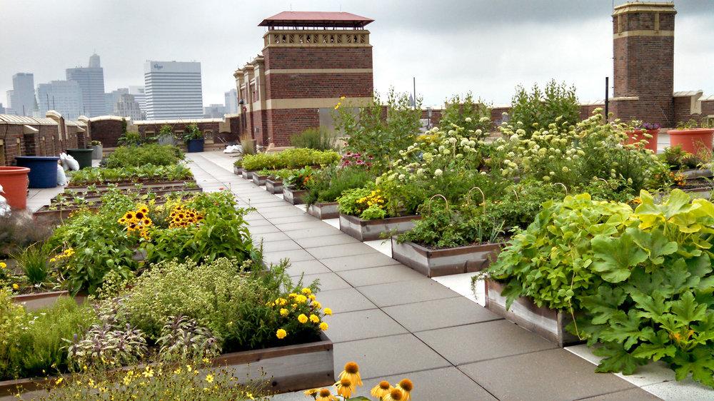 Rothenberg Rooftop Garden (RRG)