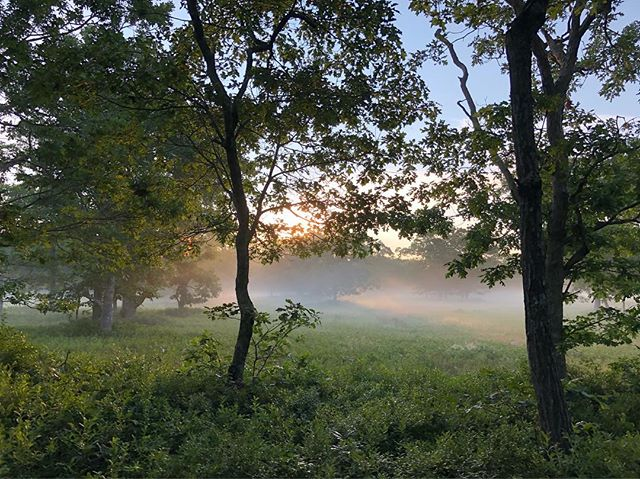 #sunlight dapples the #morning #mists #marthasvineyard #mistover #themistovertale #ghoststories #ghosts #indiefilm #film #filmsadaptedfrombooks