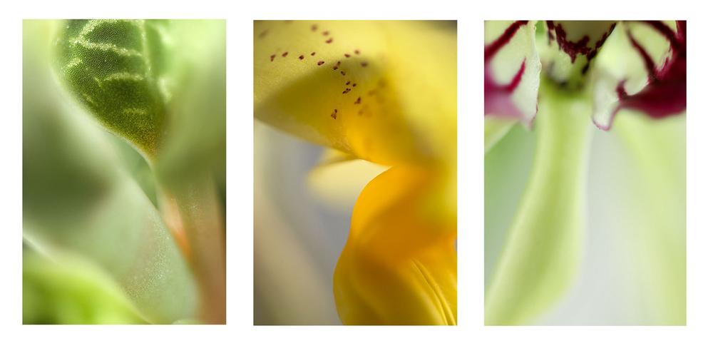 Flux - Guise - Missive Triptych