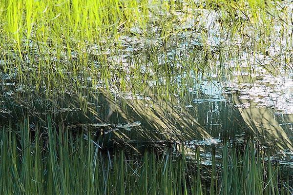 Wetlands Sun