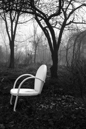 Chairy Tree  28x18  photograph on canvas  $400
