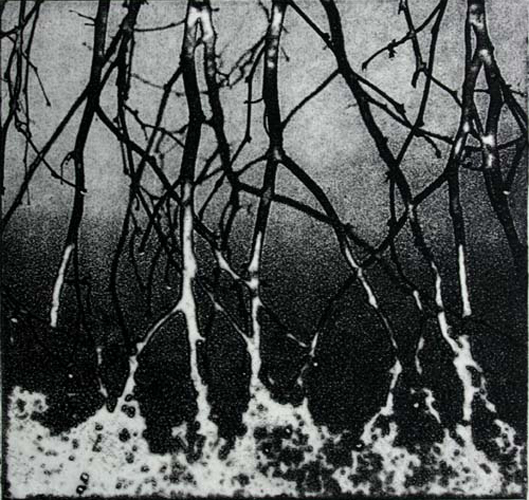 Dew Drops   5x5  photo etching  $125