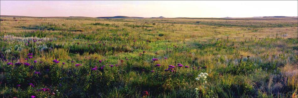 Field, Flowers