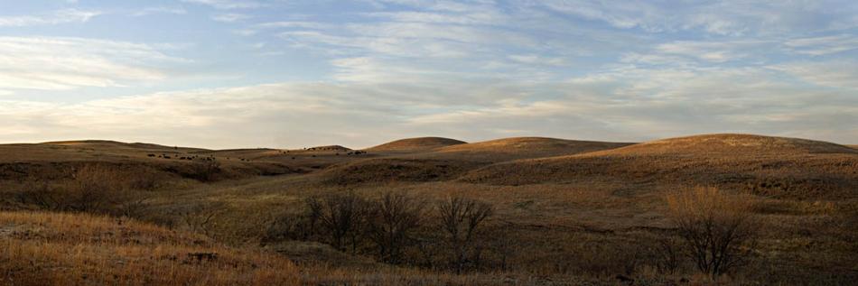 Pasture at Dusk