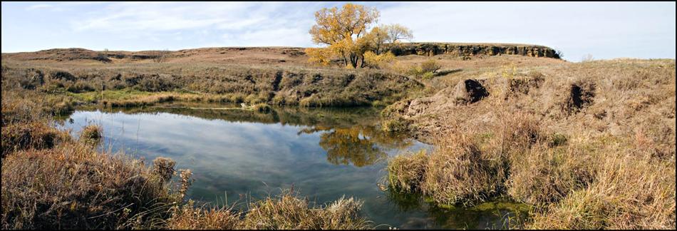 Pasture, Pond