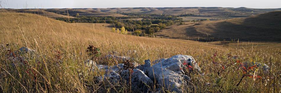 Prairie, Rock, Sumac