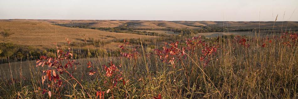 Sumac and Prairie
