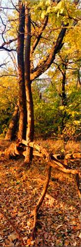 Fall, Saline Co
