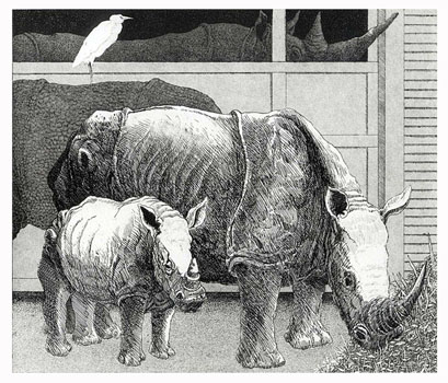 R is for Rhinos  8x9  etching  $275