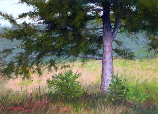 Pine on a Gray Day  8x11  pastel  $350