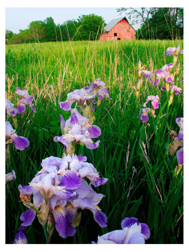 Iris & Barn