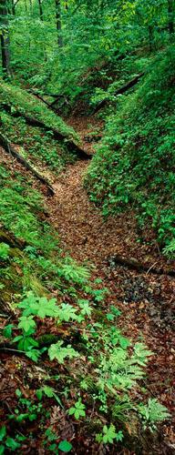 Scroll-Creek Trail