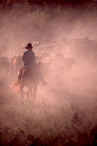 Cowboy-(CC1)