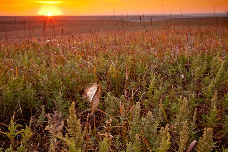 Fall Sunrise, Windmill Pasture-