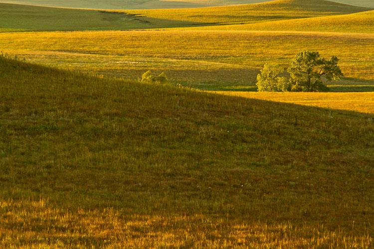 Flint Hills, Windmill Pasture, Tallgrass Prairie Preserve-(FH5)