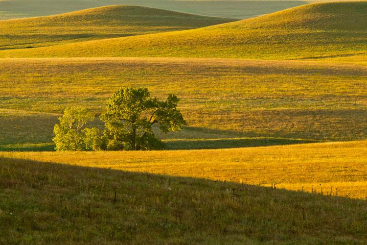 Flint Hills, Windmill Pasture, Tallgrass Prairie Preserve-(FH6)