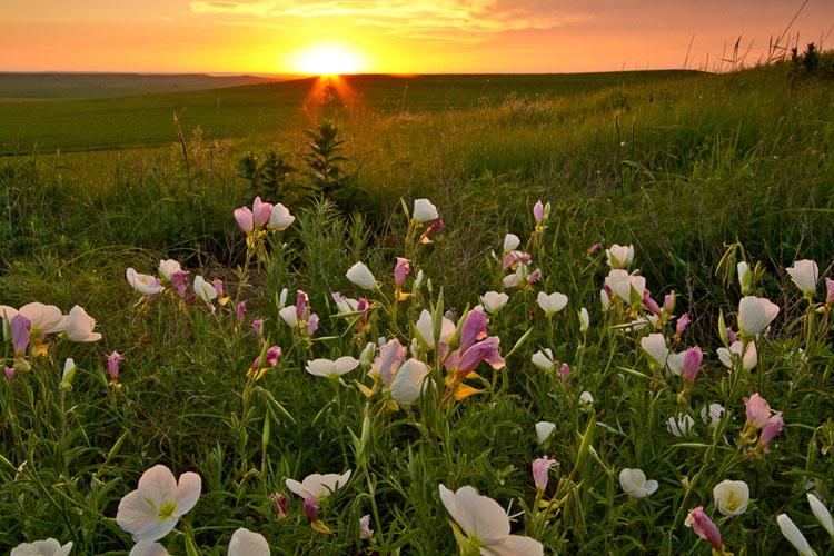 Primrose Sunrise, Tallgrass Prairie National Preserve-(FH37)