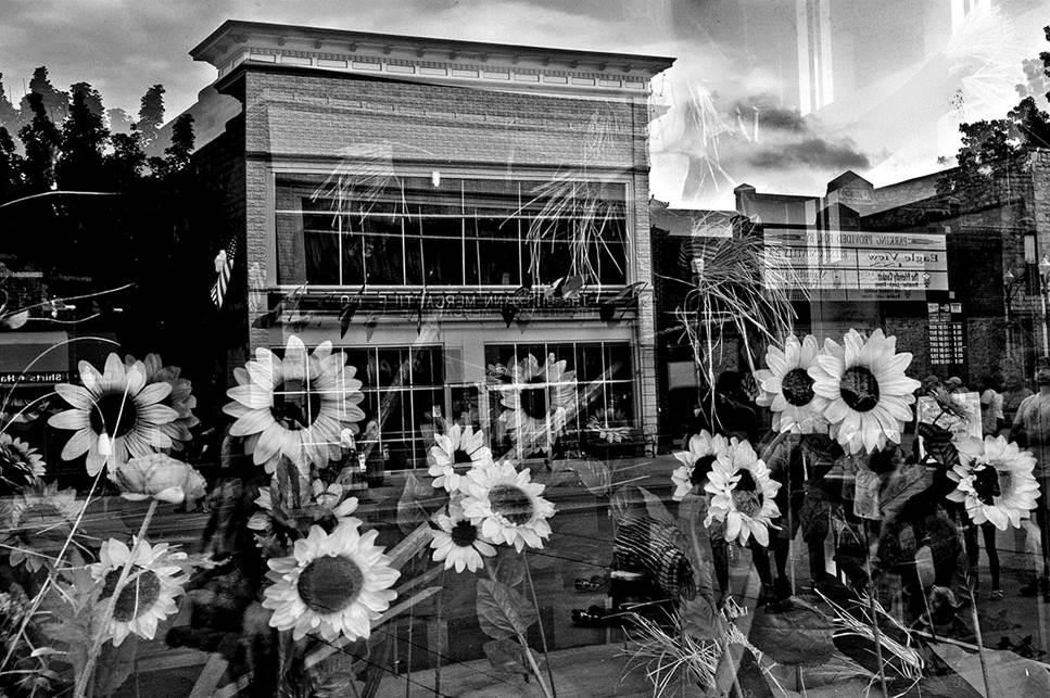 Wamego Sunflowers 16x24 b&w photograph $250 fr