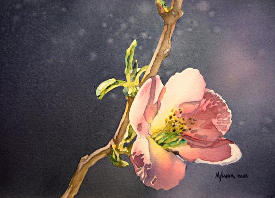 Plum Blossom 10x14 wc $290 fr