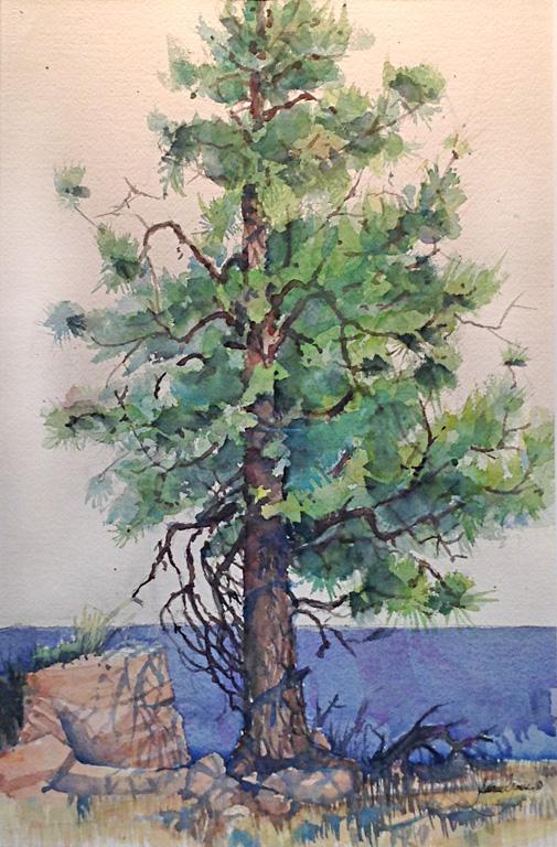 AZ Pine 21x14 wc $800 fr