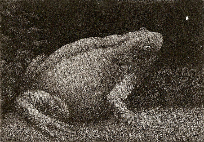 Fat Frog and Firefly  intaglio etching   2.75x4   $125(uf)  $200(fr)
