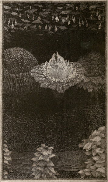 Night Blooms  intaglio etching   9.75x5.75   $175(uf)  $280(fr)