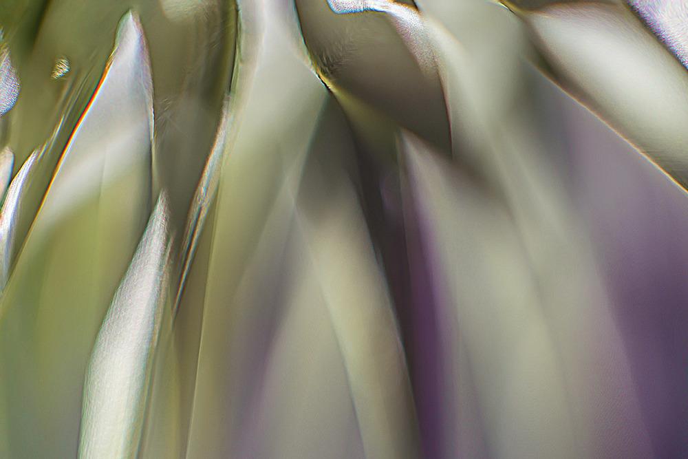 Light Fall 32x48 photograph $1,800 fr