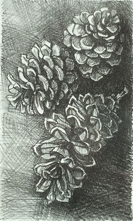 Pinecones 8x5 lithograph $125 fr