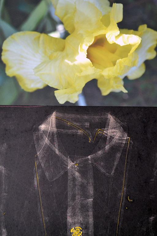 Yellow Iris 30x20 mixed print $700