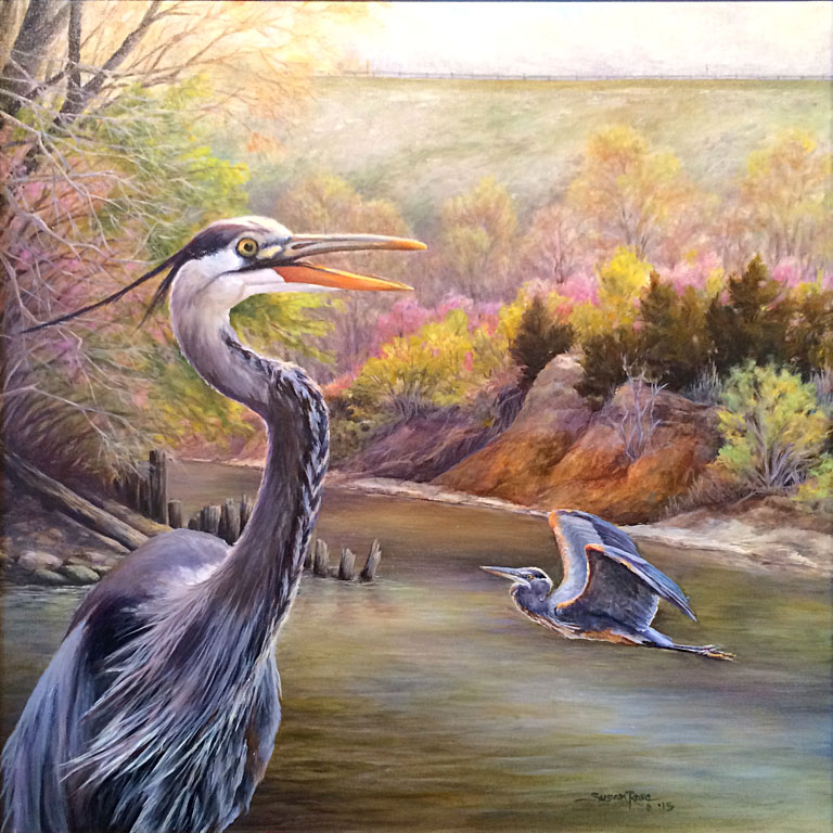 Springtime Tuttle Blues (Great Blue Heron) 24x24 oc $800 fr