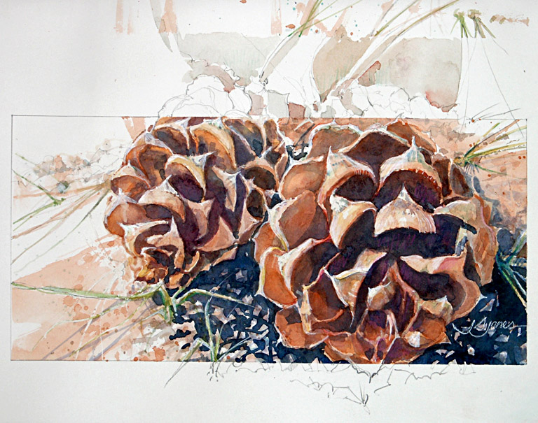 Two Pinecones  10x14  wc  $275 fr