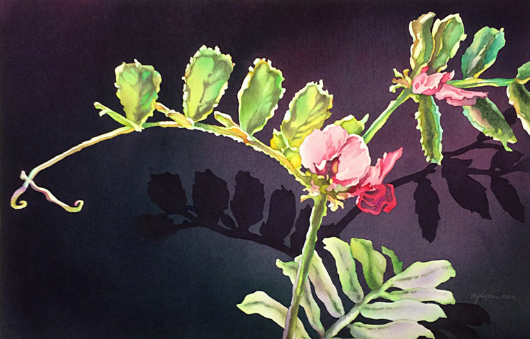 Wild Sweet Pea  14x21.5  wc  SOLD