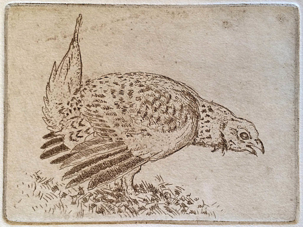 Prairie Bird, 39 of 60  4.5x6  etching  $75 uf