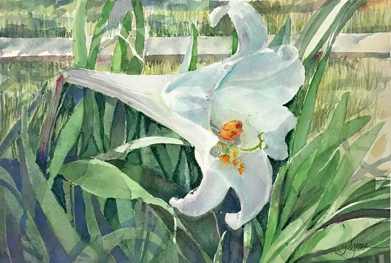 Lily White 8.5x12 wc $390 fr