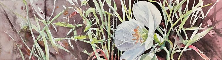 Primrose White 5x18 wc $450 fr